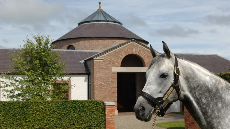 Dalakhani: the late sire hailed from a typically outstanding Aga Khan family