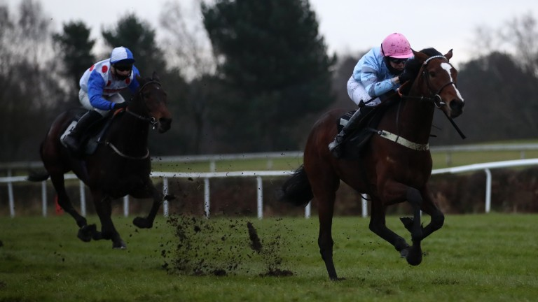 Eileendover: could be short in the betting for the Mares' National Hunt Flat race at Aintree