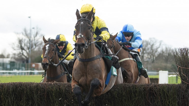 Sky Pirate: may return to hurdles at the Festival