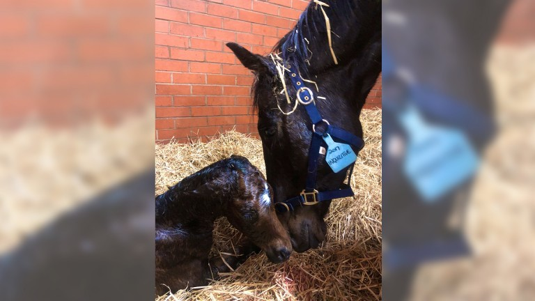 Bearstone Stud's Washington DC colt from the family of Lullaby Moon