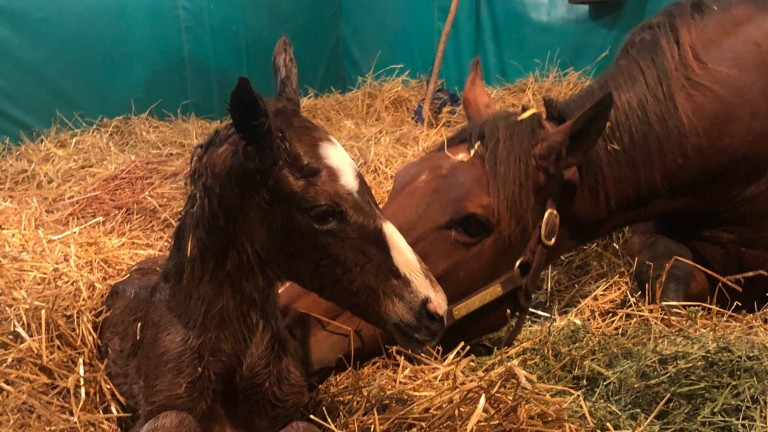 Frankfort Park Farm's Catholic Boy colt out of the multiple stakes-winning mare Zestina