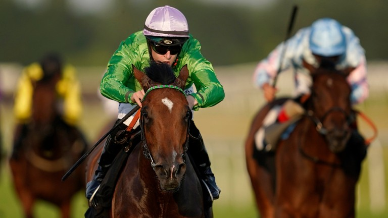 Boomer: the Group 3-winning daughter of Kingman will visit Lope De Vega for her first covering