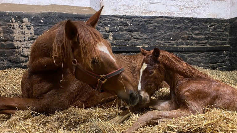 Earlier days for Byerley Stud's Flag Of Honour colt foal out of Madame Rouge