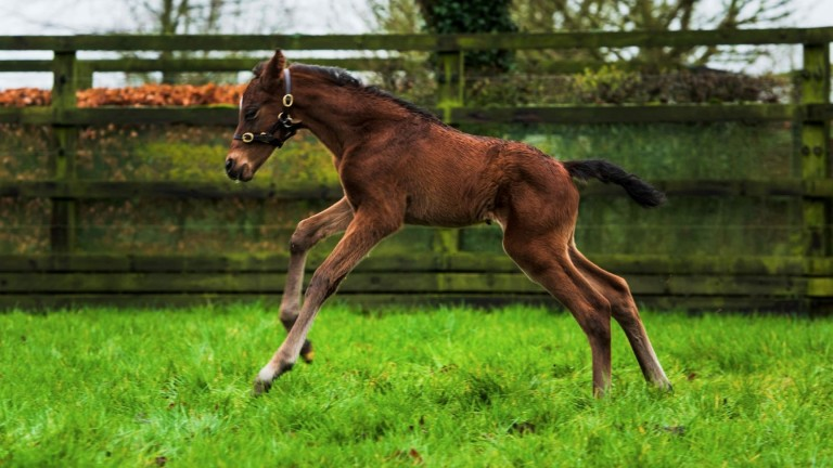 Coolmore's Galileo full-brother to Hermosa and Hydrangea stretches his legs