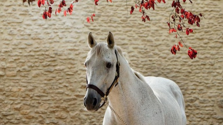 Slickly: top-class miler who became a leading sire in France