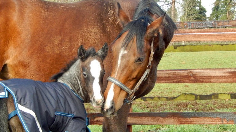A mare and foal enjoy a quiet moment at Byerley Stud
