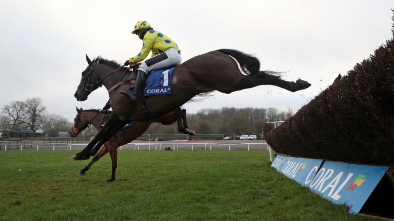 Yala Enki: has been backed for the Grade 2 Cotswold Chase