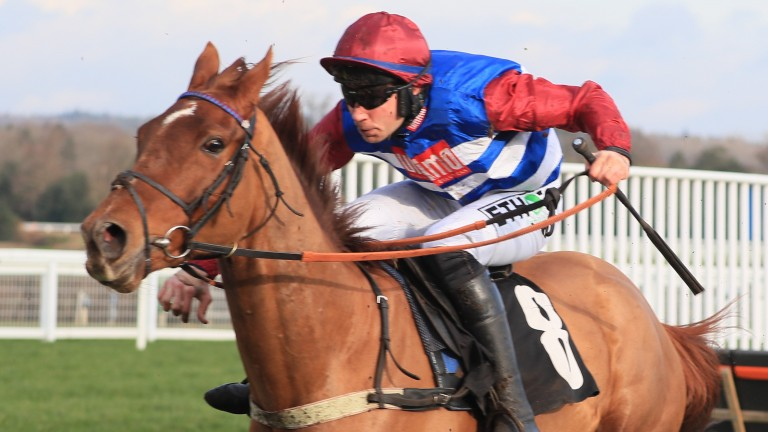 Tritonic: Triumph Hurdle contender could enhance his claims on Saturday
