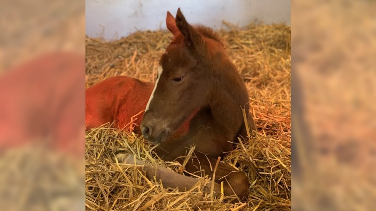 Meon Valley Stud's Lope De Vega filly out of Oaks heroine Anapurna