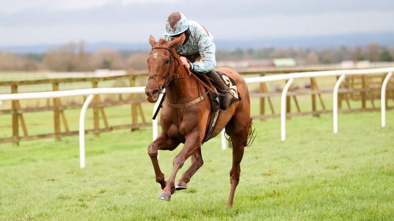 Hollymount makes a winning debut at Carlisle