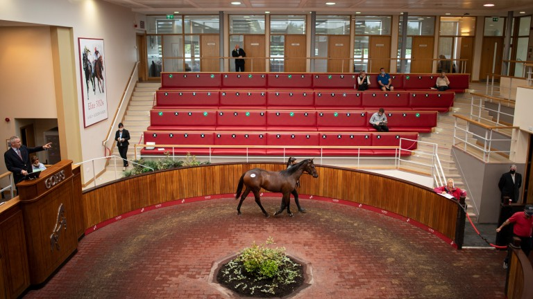 The Goffs UK sales ring will remain empty on Tuesday as the January Sale moves online