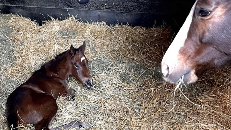 Felley Priory Stud's Acclamation filly out of Oh Dream