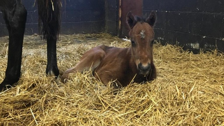 Bursea Lodge Stud's Mayson colt out of Reflected