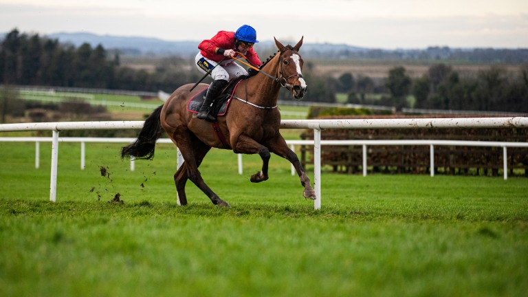 Sir Gerhard: leading contender in the Champion Bumper