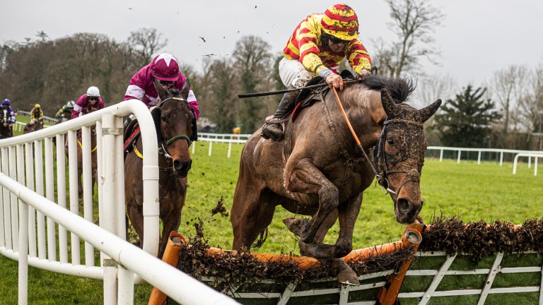 Sams Profile: stayed on best in testing conditions at Gowran Park and looks a big price