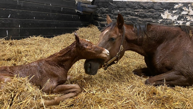 Byerley Stud's Equiano filly out of Freckles, a dual winning half-sister to the dam of A'Ali