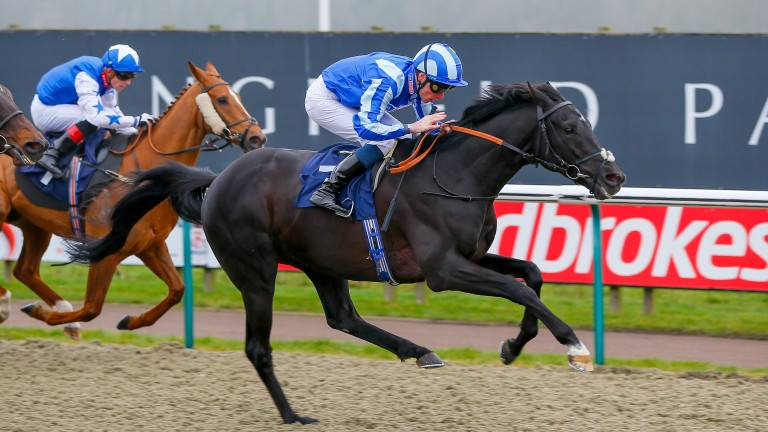 Pirate King: will be bidding to repeat last year's success at Lingfield