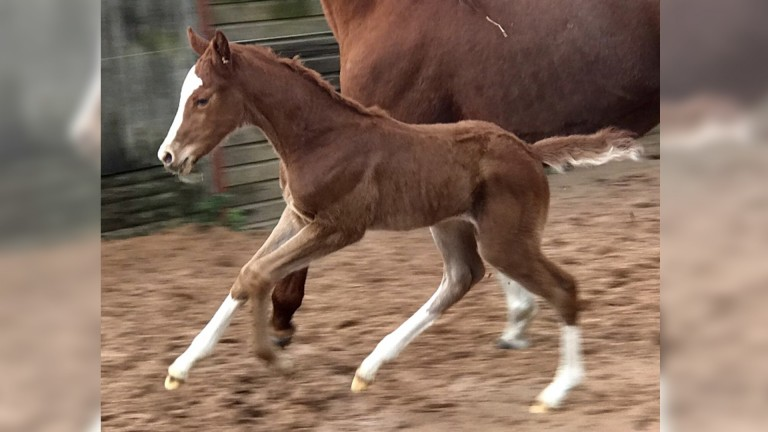 Wadacre Stud's Highland Reel filly out of winning German Mark Of Esteem mare Marilyn is already up and running