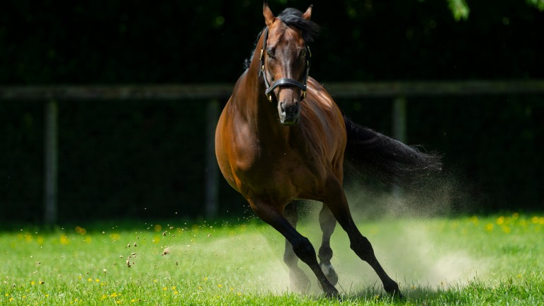 Kingman: Laurens set to be among the sire sensation's 2021 book of mares