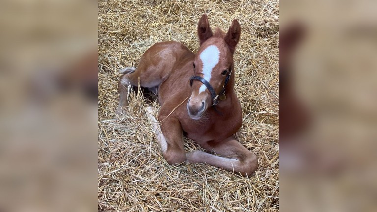 Blandford Bloodstock's New Approach filly out of the Listed-winning and Group 3-placed Shumookhi
