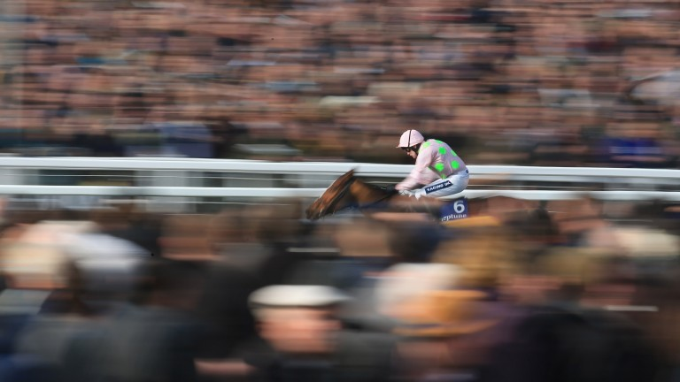 The Cheltenham Festival has been adapted in recent years