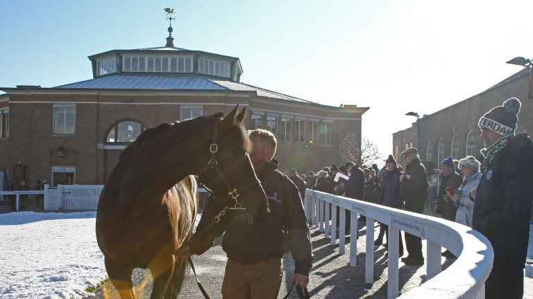 A frosty scene at the Tattersalls February Sale in 2019