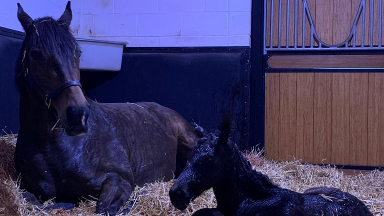 Chasemore Farm's Kingman colt out of Wall Of Sound, the dam of Group 3 winner Boomer and the promising Uncle Bryn