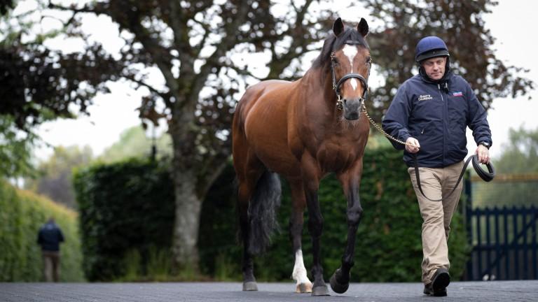 Galileo and head stallion man Tony O'Meara at Coolomore