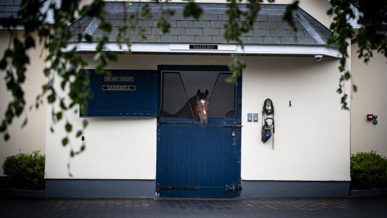 Galileo: master of all he surveys at Coolmore in County Tipperary