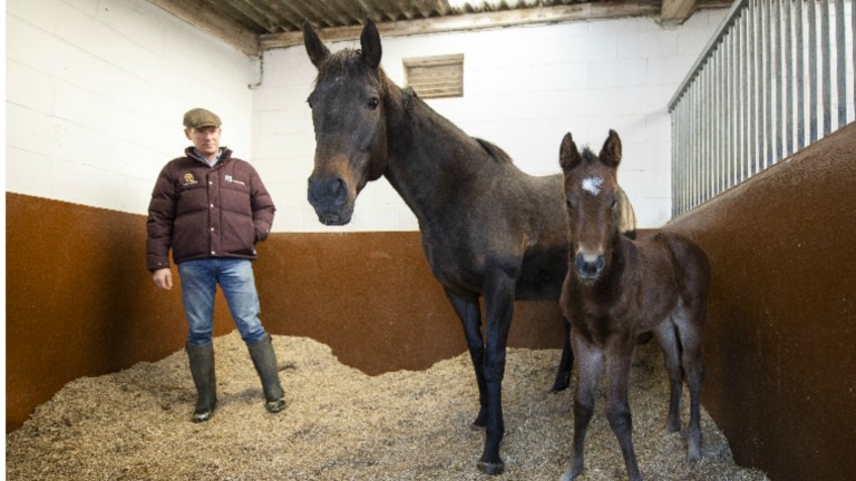 David Redvers with Lightening Pearl and her Kingman filly