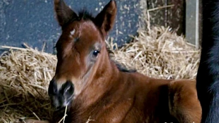 This Le Brivido filly is out of the winning Lawman mare Elegant Annie and arrived at Conduit Stud, the foaling branch of Overbury Stud