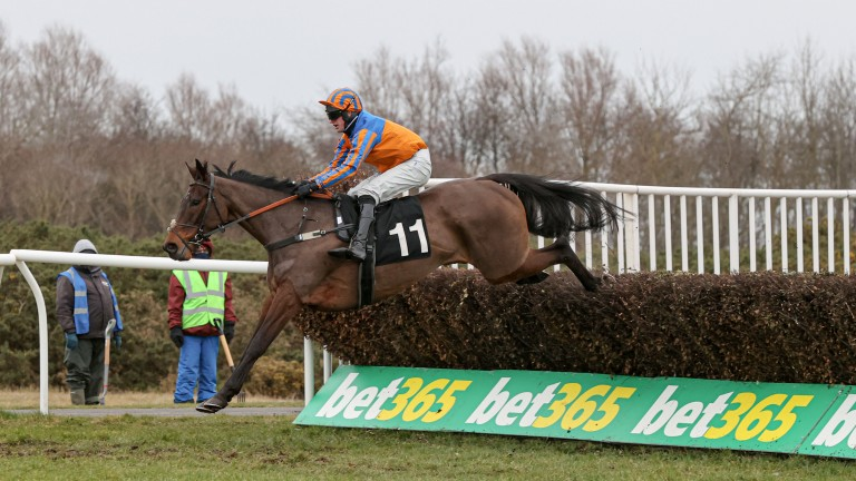 Fire Away: was heavily punted before winning at Musselburgh, the first leg of a big treble