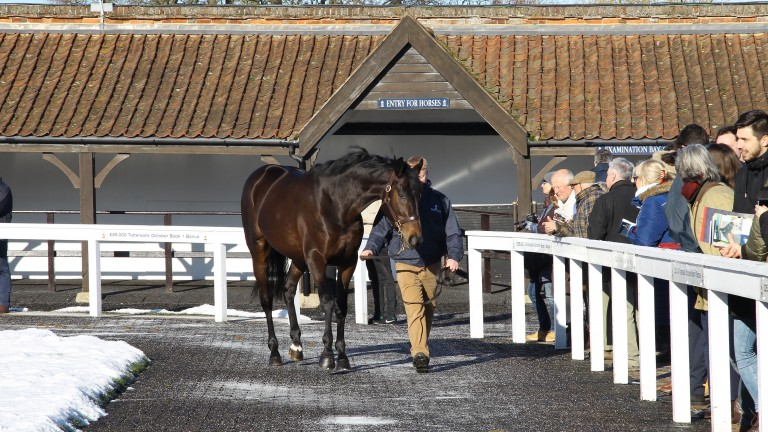 The TBA's stallion parade is always a popular winter highlight