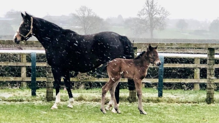 A chilly winter welcome at Goldford Stud for the latest Kingman daughter of Sunday Times, a half sister to the stellar Newspaperofrecord