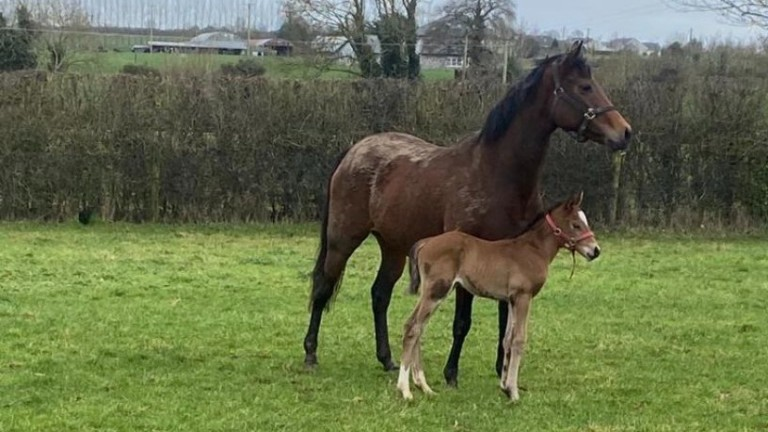 Oghill House Stud's Night Of Thunder colt out of an unraced Dansili half-sister to Dante Stakes scorer Thunderous