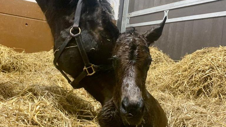 Tweenhills' Zoustar filly out of the top-class sprinter Mabs Cross
