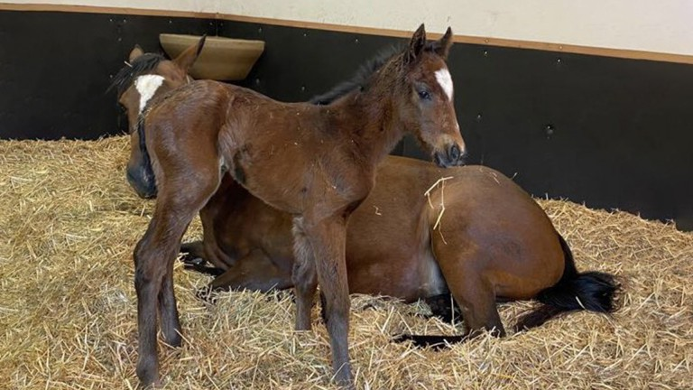 Blandford Bloodstock's Kingman colt out of Time Saver, a Frankel half-sister to Timepiece and Passage Of Time
