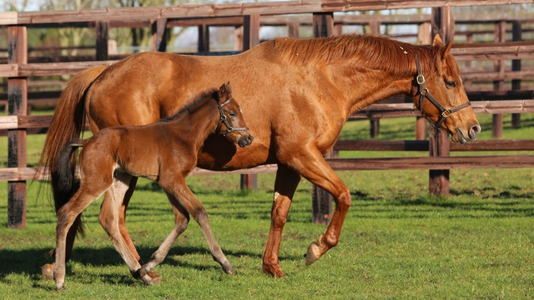 Juddmonte's Kingman filly out of Natavia, a Listed-winning daughter of Nathaniel