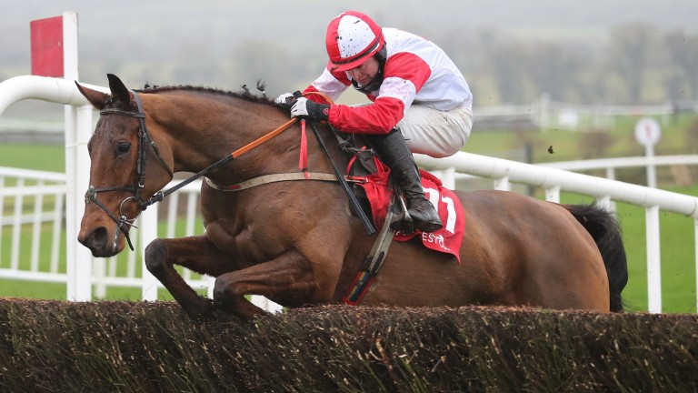 The Big Dog: won the Grand National Trial at Punchestown for Peter Fahey and Jamie Codd