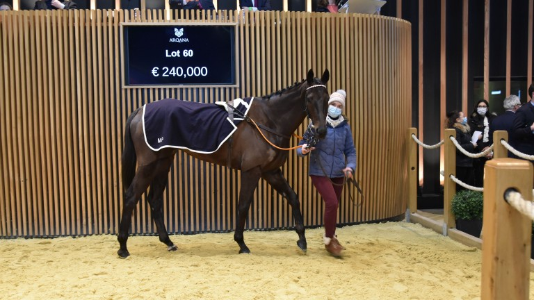 Hardi Du Mesnil in the process of selling for a session-leading €250,000