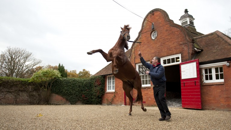 Pivotal showing off for Edward Whitaker at Cheveley Park Stud