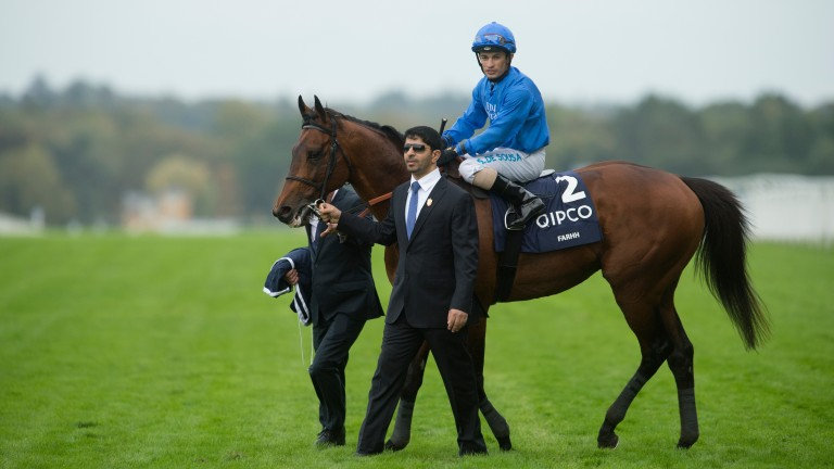 Farhh: the highest-rated son of Pivotal after the Champion Stakes at Ascot