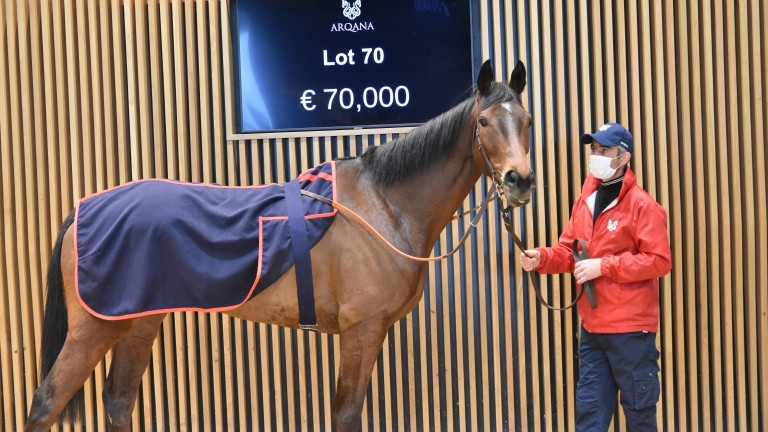 Laskalin was sold to Guy Petit at Arqana for €70,000
