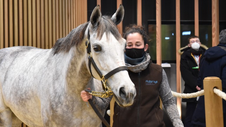 Lady Paname is set for a date with No Risk At All after being sold at Arqana for €120,000