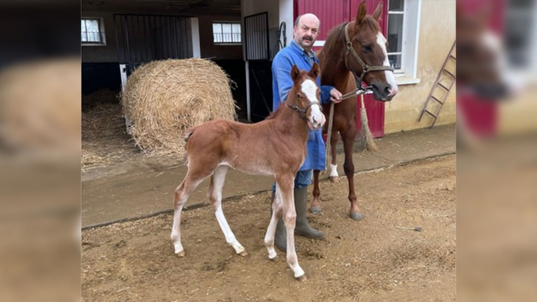 John and Gill Studd's Recoletos colt out of the New Approach mare Newcomer