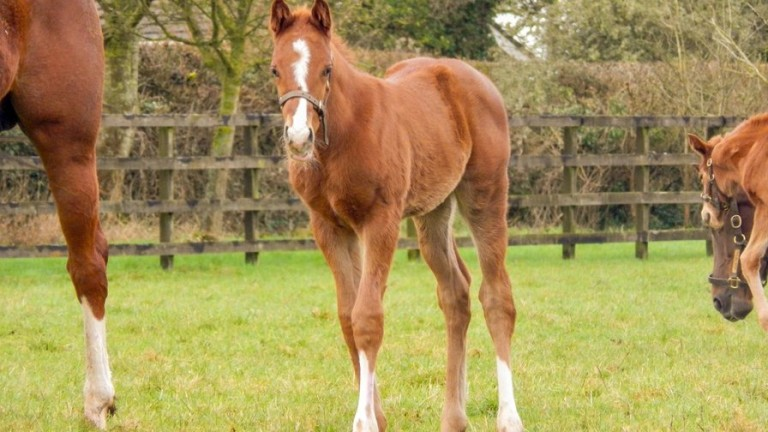 Byerley Stud's Zoustar colt out of Courteous Crown