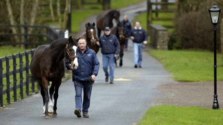 Noel Stapleton and Sadler's Wells: the breed-shaping sire leads his Derby-winning sons Galileo, Montjeu and High Chaparral around Coolmore in 2007
