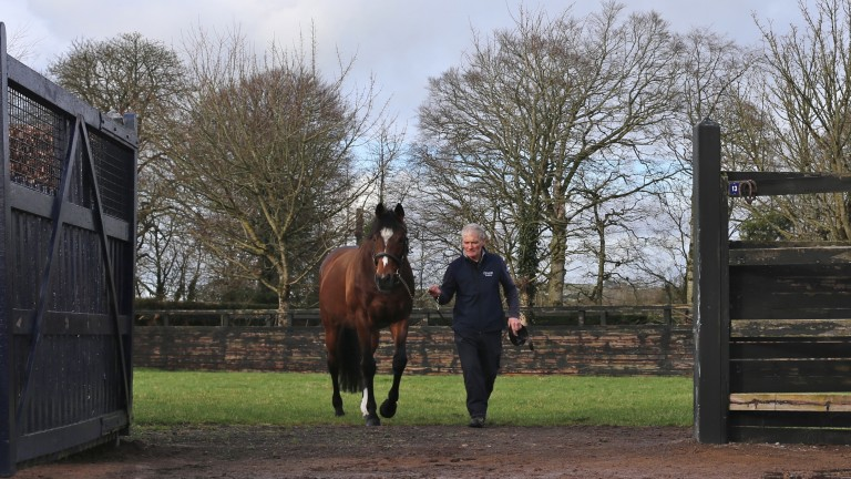 Champion sire Galileo and stallion man Paul Gleeson return from an afternoon pick of grass