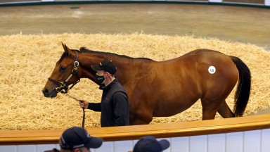 Lot 436: the Galileo filly out of Newsells Park Stud's brilliant produced Shastye tops the Tattersalls October Yearling Sale when bought by MV Magnier for 3,400,000gns