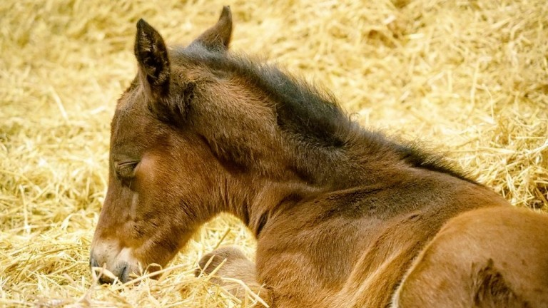 Watership Down Stud's Too Darn Hot colt out of Frankel Light